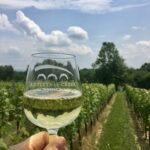 wine glass in the vineyard